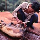 Sacrificial pig, Lisu new year, Thailand by John Spies