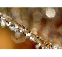 Web & Sparkles Photographic Print