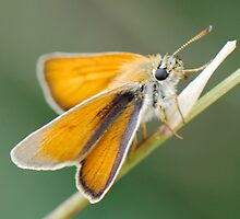 Little Skipper by John Morrison