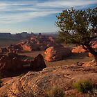 Juniper, Hunt's Mesa by rwilks