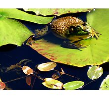 Frog on Lily Pad Photographic Print