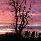 Bare tree silhouetted by pink sunset by mikekane