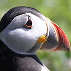 Puffin profile #1 by Meurig Davies