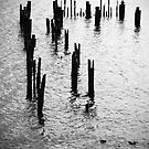 Remains of a jetty at Strahan, Tasmania by Elana Bailey