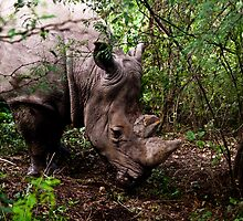 Rhino by Keith Irving