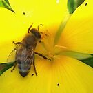 Feasting on a yellow flower by ♥⊱ B. Randi Bailey