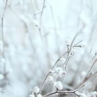 Winter mood by aMOONy