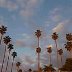 palm trees by jdphoto86