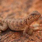 Friendly Little Gecko by jhea5333
