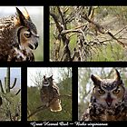Great Horned Owl ~ Raptor Series by Kimberly P-Chadwick