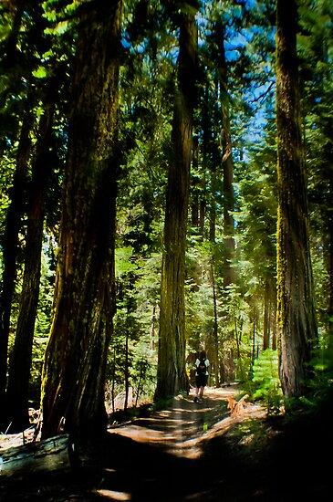 Hiking to Wawona by Phillip M. Burrow