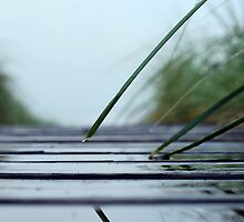 Boardwalk to the Beach on a Rainy Day by deb cole