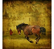 The Knight in Shining Armor's Horse Photographic Print