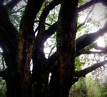 the oak by leapdaybride