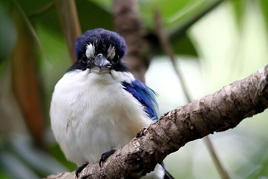 Forest Kingfisher by EnviroKey