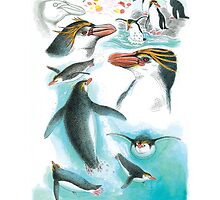 Royal Penguin by Tim Squires