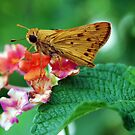 Brown Skipper by Mattie Bryant