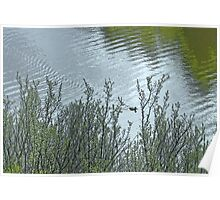 Lone Duck on Silvery Pond Poster