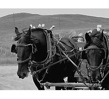 The Black Team, Bar U Ranch Photographic Print