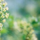 Small White Flowers by photolover08