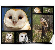 Barn Owl ~ Raptor Series Poster