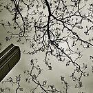 Paris - Plaisance #7 by Laurent Hunziker