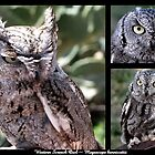 Western Screech Owl ~ Raptor Series by Kimberly P-Chadwick