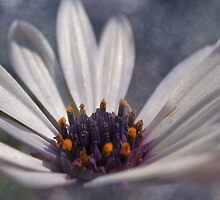 Daisy Blue. by Kristina K