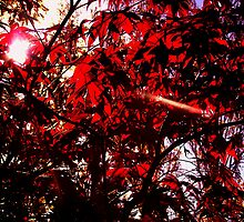 redrays by Deb Gibbons