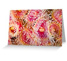 Jewel Anemonies Greeting Card