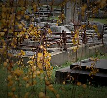 Coburg cemetery in autumn by Jacinta Knight