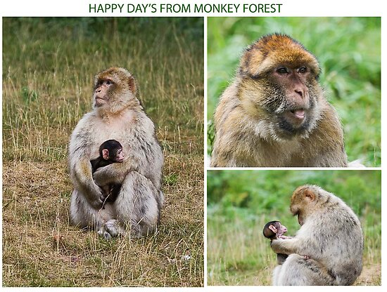 Wish you where here Monkey Forest by Elaine123