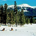 Skiing with the Elk, Jasper, Alberta, Canada by Adrian Paul