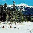 Skiing with the Elk, Jasper, Alberta, Canada by Adrian Paul