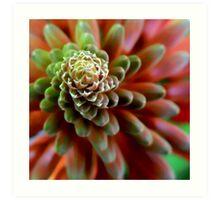 Patterns of Nature, Softness and Light Art Print
