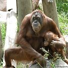 Unconditional Love - Mother and Baby Orangutan by Barberelli