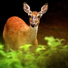 Doe Eyes by Lois  Bryan