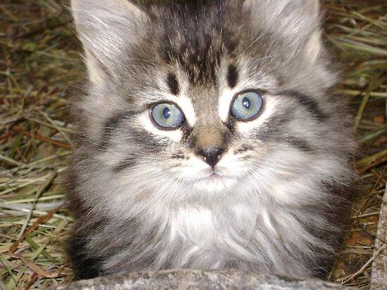 Beautiful kitten by stirlingacre
