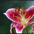 Lily #3 by Mattie Bryant