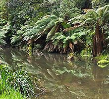 Victoria, Otway Ranges, Barham River. treeferns. by johnrf