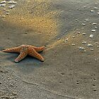 Morning Star Fish by Monte Morton