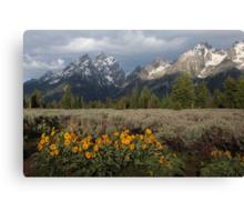 Grand Teton & Mule's Ears Canvas Print