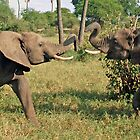 Duelling Elephants, Tarangire National Park, Tanzania by Adrian Paul