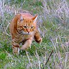 On the prowl..... by Enivea