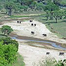 Elephant Heaven. Tarangire River, Tanzania by Adrian Paul