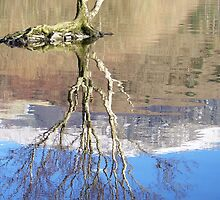 lagoons reflections  by dooberiesinwale