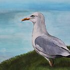 Herring Gull (Larus argentatus) by RCTrotman