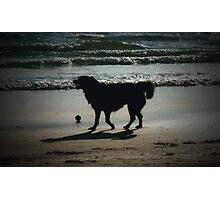 One More Game of Fetch Before the Sun Goes Down Photographic Print