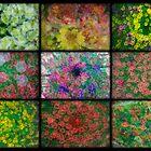 Floral Blurl by mrthink