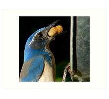 These Jays are Full of Personality Art Print